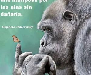 mariposa, fuerte, and alejandro jodorowsky image