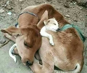 friendship, animal, and puppy image