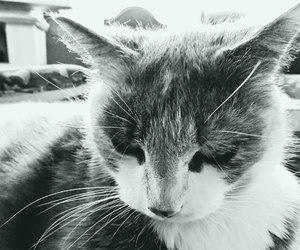 calico, cat, and female image