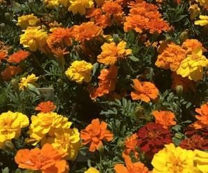 flowers, orange, and yellow image