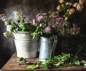 flowers and gardening image
