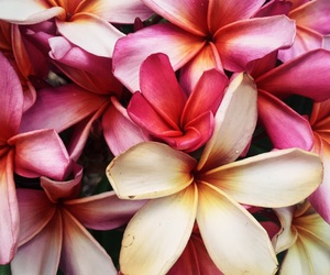 color, flower, and inspiration image