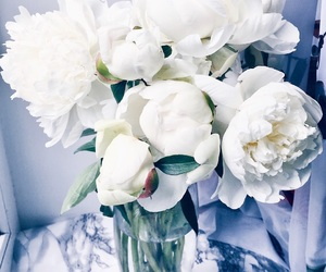 beautiful, flowers, and peonies image