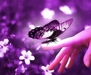 butterfly, purple, and flowers image