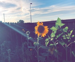 backyard, flower, and sun image