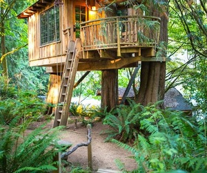 nature, tree house, and house image