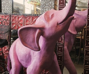 pink and pink elephant image