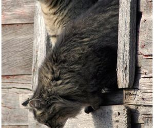 cats and animals image