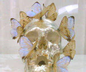 butterfly, gold, and skull image