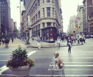 dog, street, and city image