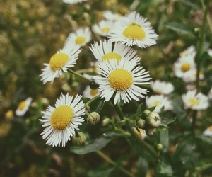 flower, green, and spring image