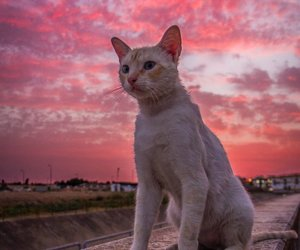 atardecer, cat, and gato image