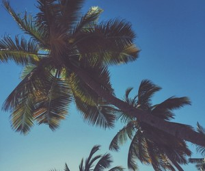 blue, green, and palm image