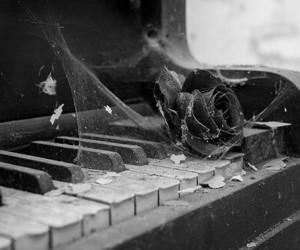 blackandwhite, rose, and music image