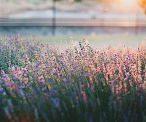 flowers, seasons, and summer image
