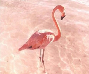 flamingo, pink, and aesthetic image