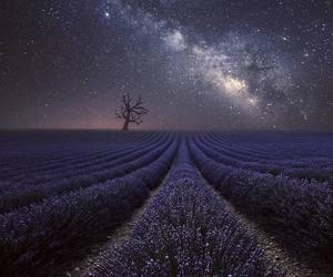 flowers and milk way image