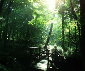 bridge, green, and hangyasz image