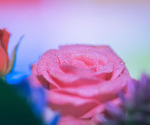 atmosphere, colorful, and flower image