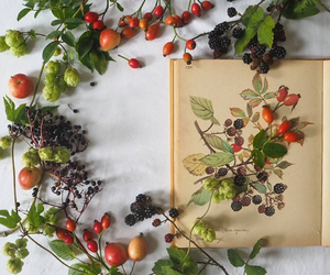 beautiful, berry, and book image