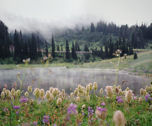 landscape, magic, and wildflowers image