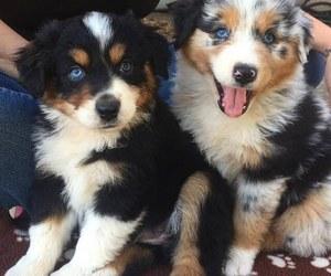 dog, animal, and tumblr image