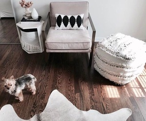 interior, home, and dog image