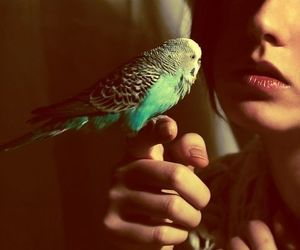 bird, girl, and budgie image