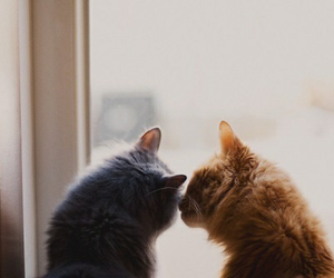 couple, cute, and cats image