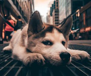 city and dog image