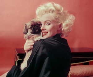 Marilyn Monroe and dog image