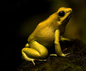 wallpaper, zoo, and grenouille image