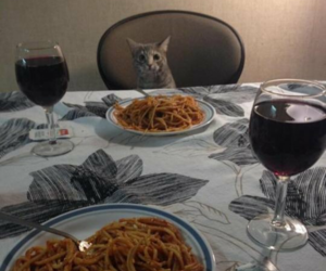cat, dinner, and funny image