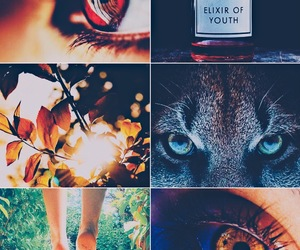 aesthetic, bella cullen, and breaking dawn image