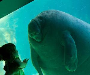 aquarium, child, and girl image
