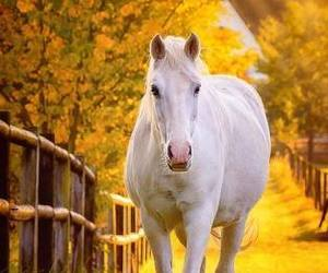 horses and i love horses image
