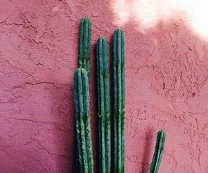 adventure, explore, and cactus image