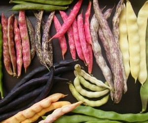 beans, colorful, and colors image