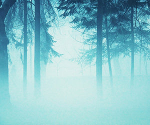blue, forest, and fog image