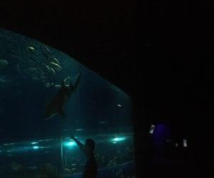 aquario, Pessoas, and rj image