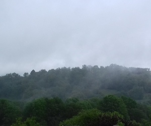 empty, forest, and grey image