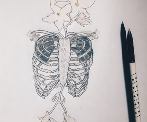 biology, bones, and flower image