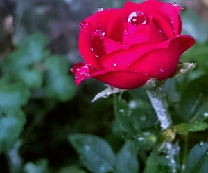 flower, nature, and raindrop image