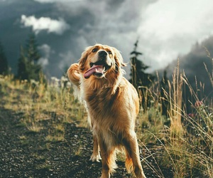 dog, outdoors, and happy image