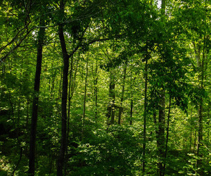 green, nature, and trees image