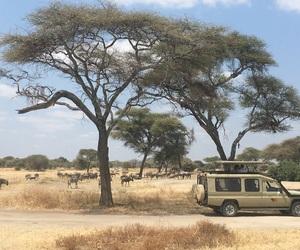 africa, exploring, and safari image