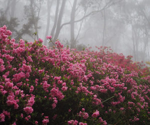flowers, mist, and fog image