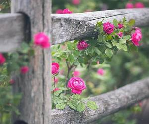 fence, flowers, and pink roses image