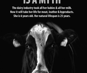 animal rights, compassion, and cows image