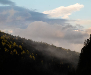 clouds, forest, and hipster image